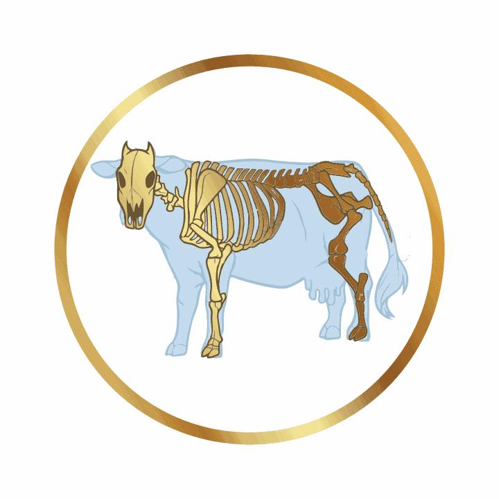 Олимпиада Анатомия и физиология животных